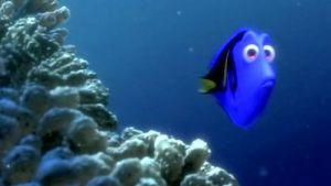 Dory swimming in the coral