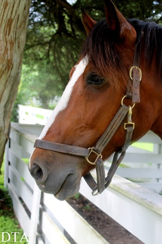 Summer Vacation 2013 1041