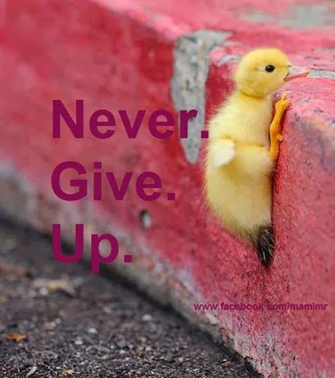 Success Quote | Never Give Up! Try Try Again! | From Amusing World on Google+ | #motivational #quote