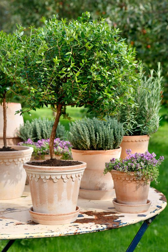 potted loveliness: