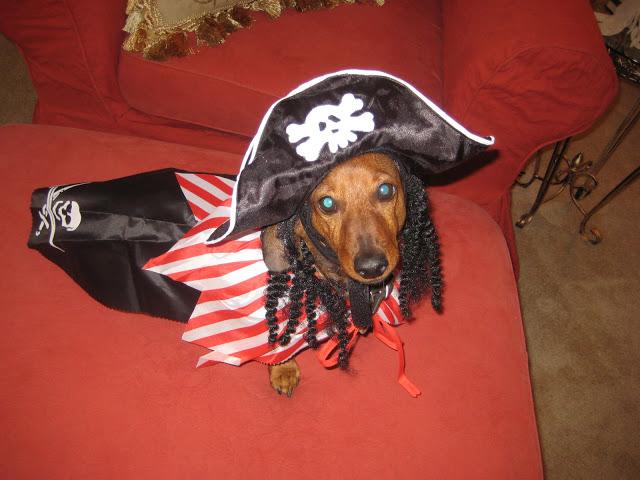 Rudi the pirate dog