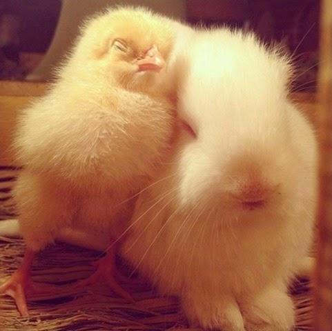 unlikely-sleeping-buddies-animal-friendship