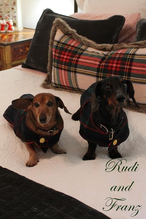 Cozy Christmas Franz and Rudi
